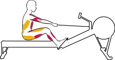 comment utiliser un rameur efficacement le blog declic fitness. Black Bedroom Furniture Sets. Home Design Ideas