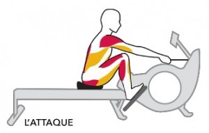muscles-rower-attaque1