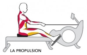 muscles-rower-propulsion2