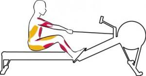 rameur-muscles-positions-le-retour
